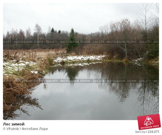 Лес зимой, фото № 234071, снято 30 октября 2004 г. (c) VPutnik / Фотобанк Лори