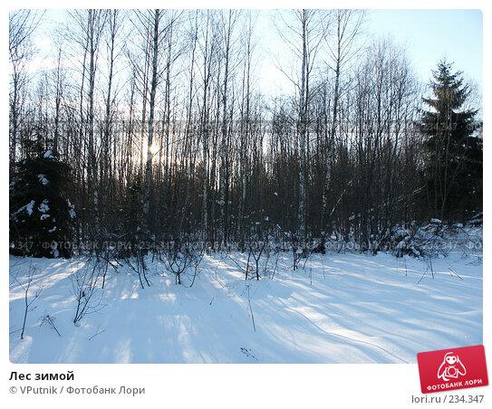 Лес зимой, фото № 234347, снято 25 февраля 2007 г. (c) VPutnik / Фотобанк Лори