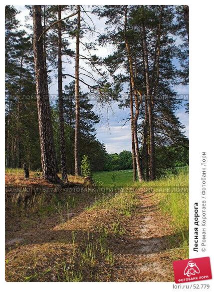 Купить «Лесная дорога», фото № 52779, снято 10 июня 2007 г. (c) Роман Коротаев / Фотобанк Лори