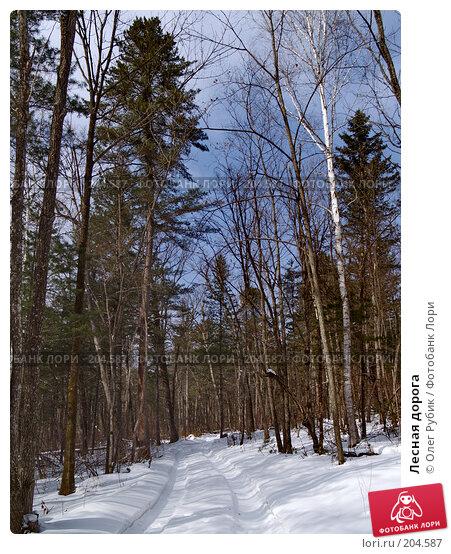 Лесная дорога, фото № 204587, снято 16 февраля 2008 г. (c) Олег Рубик / Фотобанк Лори