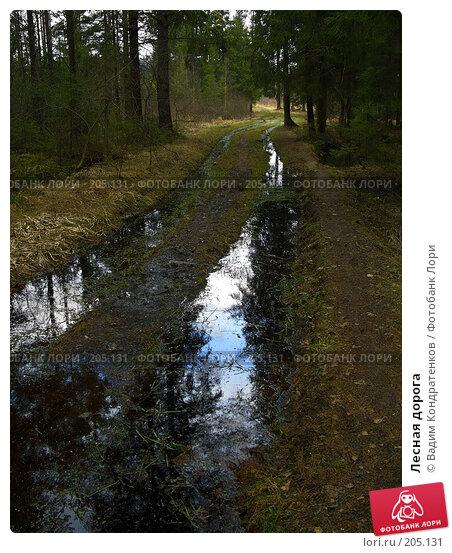Лесная дорога, фото № 205131, снято 28 марта 2017 г. (c) Вадим Кондратенков / Фотобанк Лори