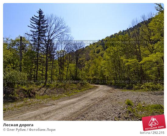 Лесная дорога, фото № 292215, снято 14 мая 2008 г. (c) Олег Рубик / Фотобанк Лори