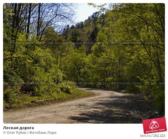 Лесная дорога, фото № 292223, снято 14 мая 2008 г. (c) Олег Рубик / Фотобанк Лори