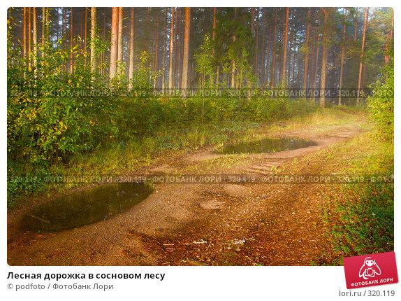 Лесная дорожка в сосновом лесу, фото № 320119, снято 8 сентября 2007 г. (c) podfoto / Фотобанк Лори