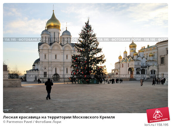 Купить «Лесная красавица на территории Московского Кремля», фото № 158195, снято 23 декабря 2007 г. (c) Parmenov Pavel / Фотобанк Лори