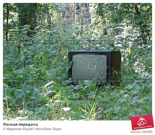 Лесная передача, фото № 20659, снято 16 июля 2005 г. (c) Марюнин Юрий / Фотобанк Лори