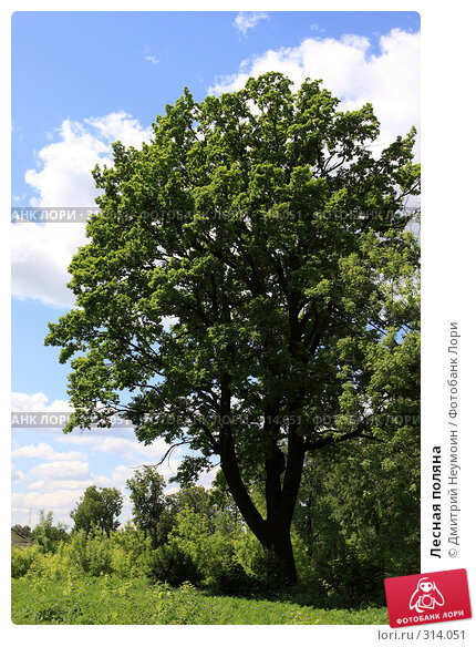 Лесная поляна, эксклюзивное фото № 314051, снято 2 июня 2008 г. (c) Дмитрий Неумоин / Фотобанк Лори