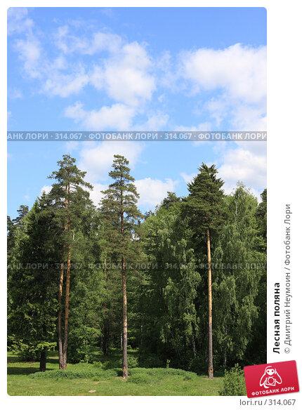 Лесная поляна, эксклюзивное фото № 314067, снято 2 июня 2008 г. (c) Дмитрий Нейман / Фотобанк Лори