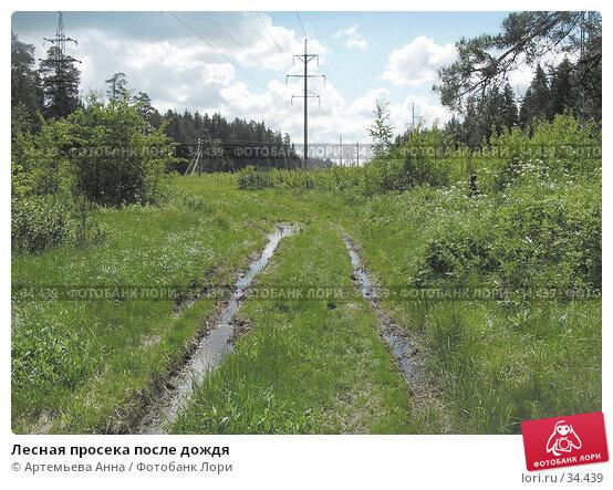 Лесная просека после дождя, фото № 34439, снято 26 мая 2017 г. (c) Артемьева Анна / Фотобанк Лори