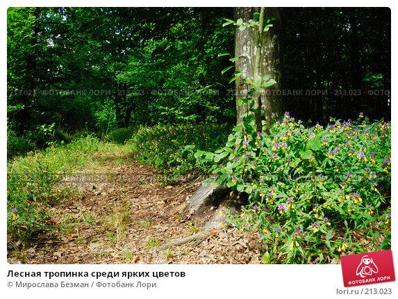 Лесная тропинка среди ярких цветов, фото № 213023, снято 25 июля 2007 г. (c) Мирослава Безман / Фотобанк Лори