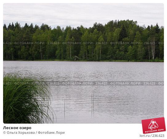 Купить «Лесное озеро», фото № 236623, снято 11 июня 2007 г. (c) Ольга Хорькова / Фотобанк Лори