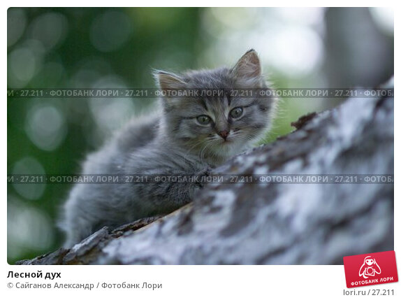 Лесной дух, фото № 27211, снято 25 июня 2006 г. (c) Сайганов Александр / Фотобанк Лори