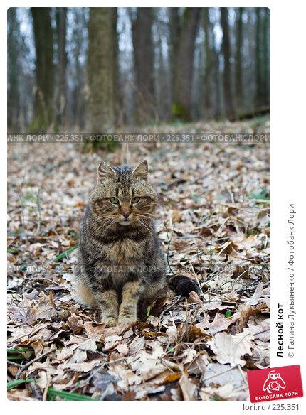 Купить «Лесной кот», фото № 225351, снято 15 марта 2008 г. (c) Галина Лукьяненко / Фотобанк Лори
