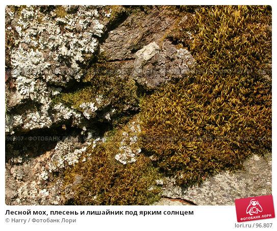 Лесной мох, плесень и лишайник под ярким солнцем, фото № 96807, снято 24 августа 2007 г. (c) Harry / Фотобанк Лори