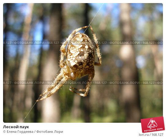 Лесной паук, фото № 168127, снято 17 сентября 2006 г. (c) Елена Гордеева / Фотобанк Лори