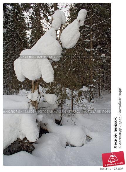 Лесной пейзаж, фото № 173803, снято 4 января 2008 г. (c) Александр Лядов / Фотобанк Лори