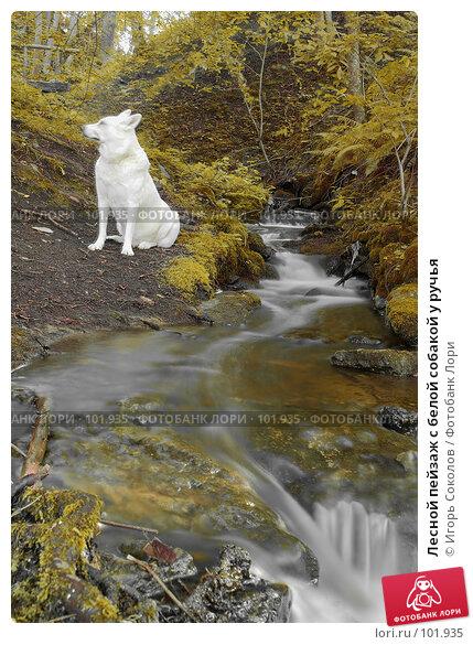 Лесной пейзаж с белой собакой у ручья, фото № 101935, снято 24 сентября 2017 г. (c) Игорь Соколов / Фотобанк Лори