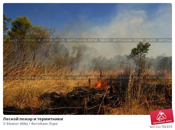 Лесной пожар и термитники, фото № 54615, снято 3 июля 2007 г. (c) Eleanor Wilks / Фотобанк Лори