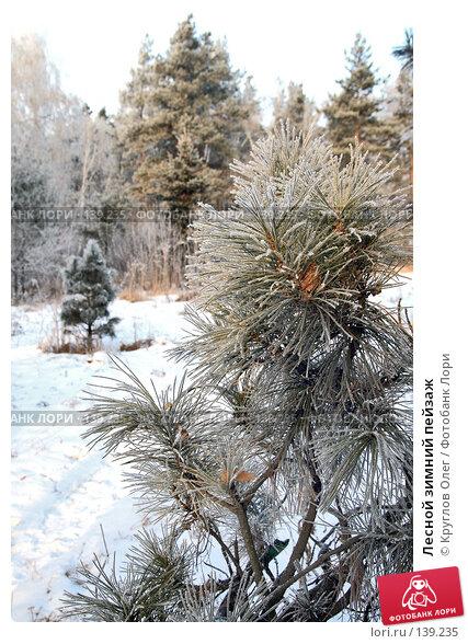 Лесной зимний пейзаж, фото № 139235, снято 5 декабря 2007 г. (c) Круглов Олег / Фотобанк Лори