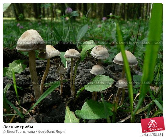 Лесные грибы, фото № 58651, снято 4 июля 2007 г. (c) Вера Тропынина / Фотобанк Лори