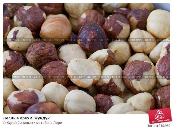 Лесные орехи. Фундук, фото № 18959, снято 22 февраля 2007 г. (c) Юрий Синицын / Фотобанк Лори