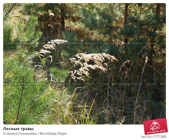 Лесные травы, эксклюзивное фото № 177543, снято 22 сентября 2007 г. (c) Алина Голышева / Фотобанк Лори