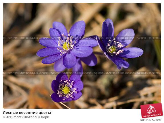 Лесные весенние цветы, фото № 52091, снято 2 мая 2006 г. (c) Argument / Фотобанк Лори