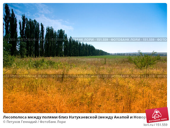 Лесополоса между полями близ Натухаевской (между Анапой и Новороссийском), фото № 151559, снято 9 августа 2007 г. (c) Петухов Геннадий / Фотобанк Лори