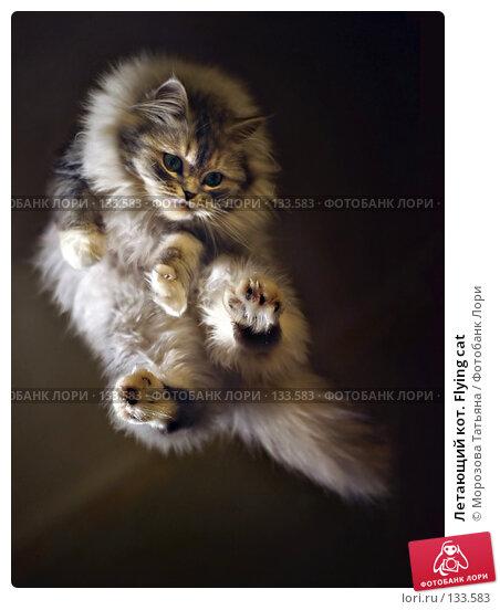 Купить «Летающий кот. Flying cat», фото № 133583, снято 26 декабря 2004 г. (c) Морозова Татьяна / Фотобанк Лори