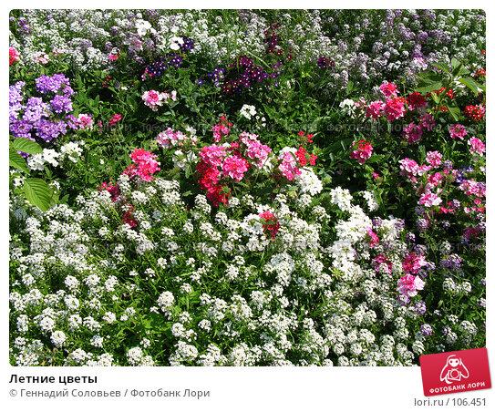 Летние цветы, фото № 106451, снято 30 июля 2007 г. (c) Геннадий Соловьев / Фотобанк Лори
