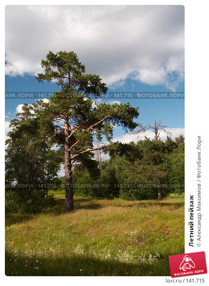 Летний пейзаж, фото № 141715, снято 2 июля 2006 г. (c) Александр Максимов / Фотобанк Лори