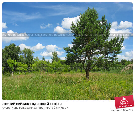 Купить «Летний пейзаж с одинокой сосной», фото № 5004755, снято 11 июля 2013 г. (c) Светлана Ильева (Иванова) / Фотобанк Лори