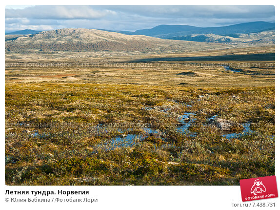 Купить «Летняя тундра. Норвегия», фото № 7438731, снято 10 августа 2011 г. (c) Юлия Бабкина / Фотобанк Лори