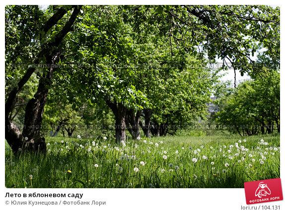 Лето в яблоневом саду, фото № 104131, снято 26 июля 2017 г. (c) Юлия Кузнецова / Фотобанк Лори