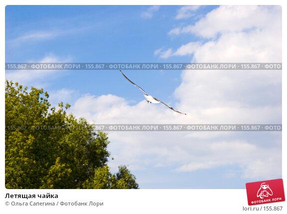 Летящая чайка, фото № 155867, снято 3 июля 2007 г. (c) Ольга Сапегина / Фотобанк Лори