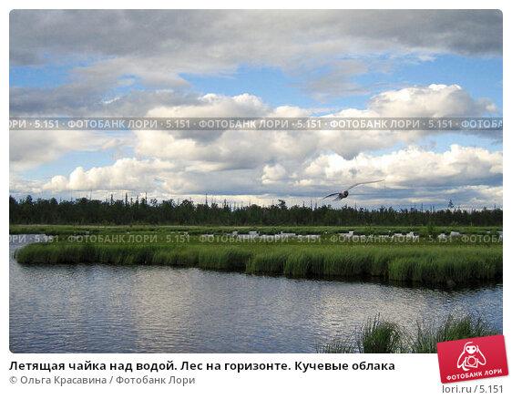 Летящая чайка над водой. Лес на горизонте. Кучевые облака, фото № 5151, снято 1 августа 2005 г. (c) Ольга Красавина / Фотобанк Лори