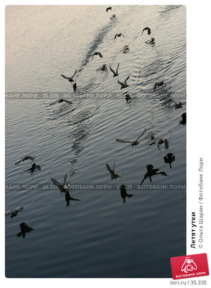 Летят утки, фото № 35335, снято 13 февраля 2006 г. (c) Ольга Шаран / Фотобанк Лори