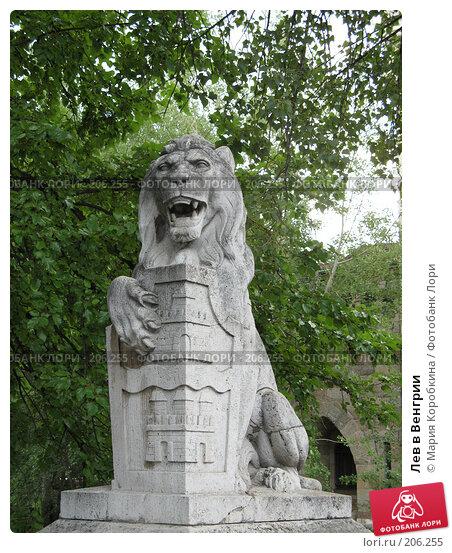 Лев в Венгрии, фото № 206255, снято 20 июля 2017 г. (c) Мария Коробкина / Фотобанк Лори