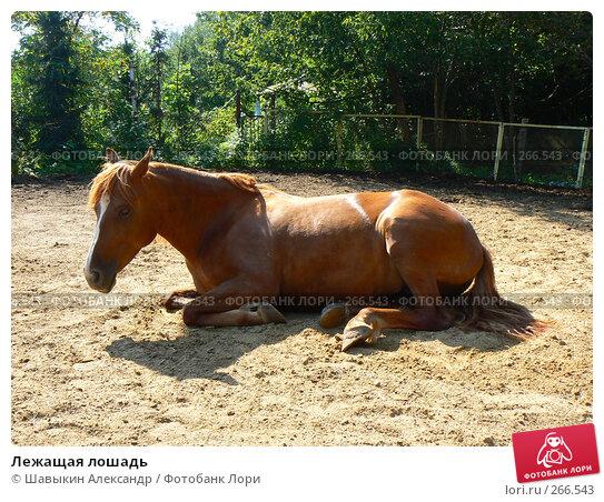 Лежащая лошадь, фото № 266543, снято 14 августа 2007 г. (c) Шавыкин Александр / Фотобанк Лори