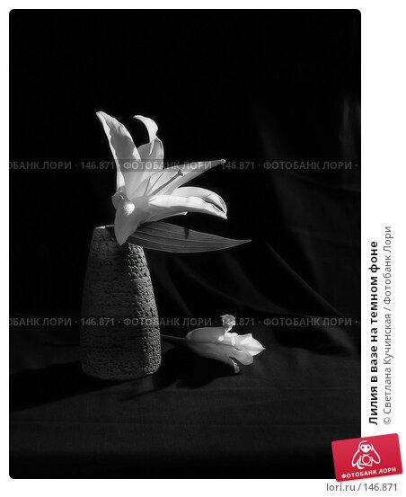 Лилия в вазе на темном фоне, фото № 146871, снято 17 января 2017 г. (c) Светлана Кучинская / Фотобанк Лори