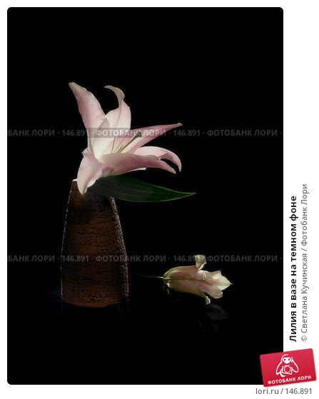 Лилия в вазе на темном фоне, фото № 146891, снято 29 мая 2017 г. (c) Светлана Кучинская / Фотобанк Лори