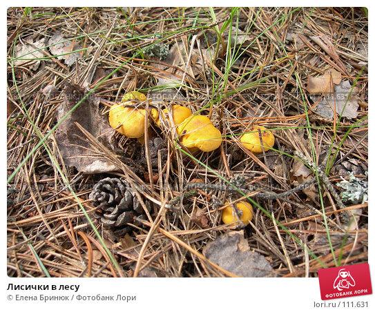 Лисички в лесу, фото № 111631, снято 15 июля 2007 г. (c) Елена Бринюк / Фотобанк Лори