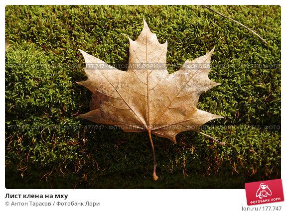 Лист клена на мху, фото № 177747, снято 26 октября 2016 г. (c) Антон Тарасов / Фотобанк Лори