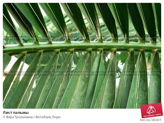 Купить «Лист пальмы», фото № 43611, снято 4 апреля 2007 г. (c) Вера Тропынина / Фотобанк Лори