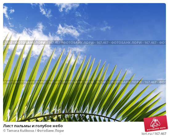 Лист пальмы и голубое небо, фото № 167467, снято 4 января 2008 г. (c) Tamara Kulikova / Фотобанк Лори