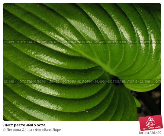 Лист растения хоста, фото № 26499, снято 23 мая 2006 г. (c) Петрова Ольга / Фотобанк Лори