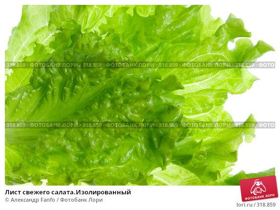 Лист свежего салата.Изолированный, фото № 318859, снято 25 октября 2016 г. (c) Александр Fanfo / Фотобанк Лори