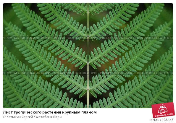 Лист тропического растения крупным планом, фото № 198143, снято 28 октября 2016 г. (c) Катыкин Сергей / Фотобанк Лори