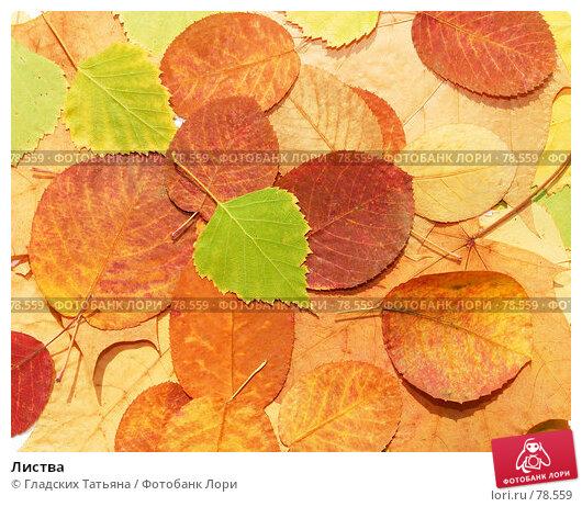 Листва, фото № 78559, снято 4 августа 2007 г. (c) Гладских Татьяна / Фотобанк Лори