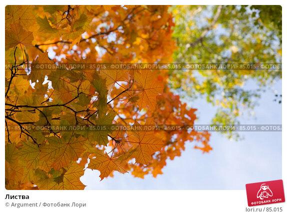 Листва, фото № 85015, снято 17 сентября 2007 г. (c) Argument / Фотобанк Лори